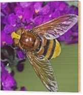 Hornet Mimic Hoverfly Wood Print by Science Photo Library