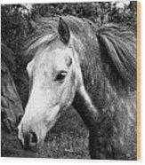Horses Wood Print by Thomas Leon