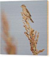 House Sparrow (passer Domesticus Wood Print