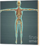 Human Body Showing Skeletal System Wood Print