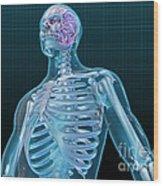 Human Skeleton And Brain, Artwork Wood Print