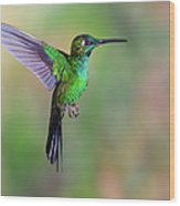 Hummingbird , Green-crowned Brilliant Wood Print