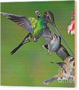 Hummingbirds At Feeder Wood Print