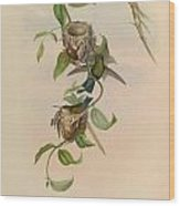 Hummingbirds Wood Print