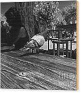 Hungry Pigeon At Mcdonalds Bw Wood Print