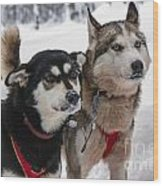 Husky Dogs Pull A Sledge  Wood Print by Lilach Weiss