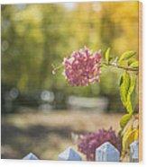 Hydrangeas In The Autumn Sun Wood Print