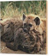 Hyene Tachetee Crocuta Crocuta Wood Print