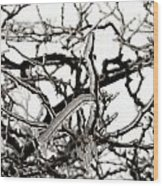 Ice On Branches Wood Print