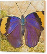 Indian Leaf Butterfly Wood Print