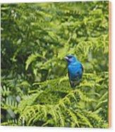 Indigo X Lazuli Bunting Hybrid Wood Print