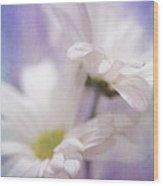 Iris Daisy Wood Print