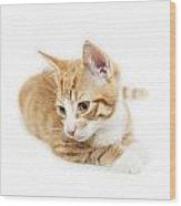 Isolated Ginger Kitten Wood Print