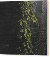 Ivy League Wood Print