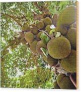 Jackfruit Tree With Fruit Growing Wood Print