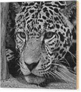 Jaguar In Black And White II Wood Print by Sandy Keeton