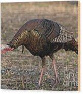 Jake Eastern Wild Turkey Wood Print by Linda Freshwaters Arndt