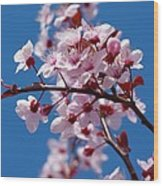 Japanese Cherry Tree Wood Print