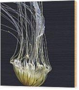 Jellyfish Of Aquarium Of The Bay San Francisco Wood Print