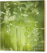 June Green Grass Flowering Wood Print by Elena Elisseeva
