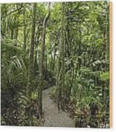Jungle Trail Wood Print