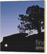 Juniper Tree At Dawn Wood Print