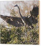 Juvenile Blue Heron Wood Print
