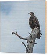 Juvenile Eagle Wood Print