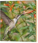 Juvenile Male Ruby-throated Hummingbird Wood Print