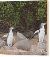 Juvenile Nz Yellow-eyed Penguins Or Hoiho On Shore Wood Print
