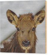 Juvenile Pa. Elk Wood Print