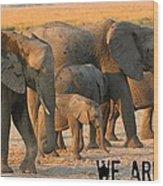 Kalahari Elephants Wood Print