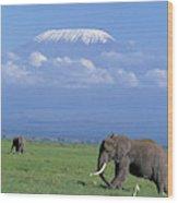 Kilimandjaro Wood Print