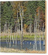 Kimsey Lake Wood Print