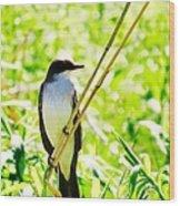 Kingbird Wood Print