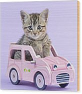 Kitten In Pink Car Wood Print