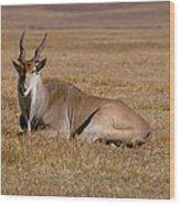 Eland Antelope In Kenya Wood Print
