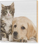 Labrador And Forest Cat Wood Print