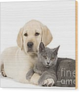 Labrador Puppy With Chartreux Kitten Wood Print