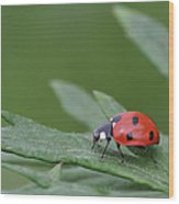 Lady Bird Wood Print