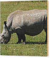 Lake Nakuru White Rhinoceros Wood Print