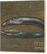 Lamprey Eel, Illustration Wood Print