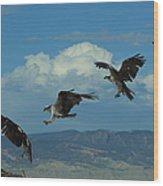 Landing Pattern Of The Osprey Wood Print