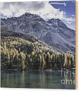 Larch Pine Reflections Wood Print