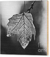 Last Standing Leaf Wood Print