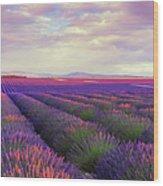Lavender Field At Dusk Wood Print