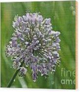 Lavender Globe Lily Wood Print