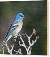 Lazuli Bunting Wood Print