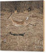 Leaping Impala Wood Print