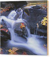 Leaves In Little River Great Smoky Wood Print